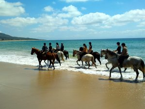 7 Day Intensive Horse Riding Adventure in a Nature Park, in Tarifa, Andalusia