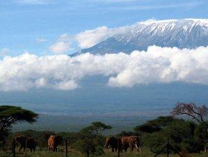 3 Days Amboseli Wildlife Safaris in Kenya