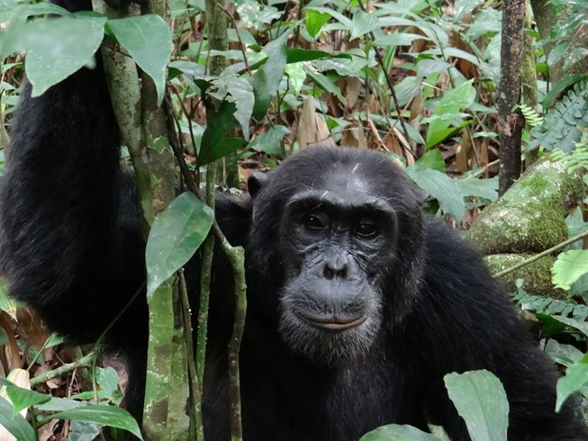 2 Days Gorilla Tracking Safari in Rwanda