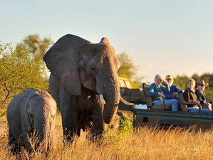 4 Days Fly-in Safari in Sabi Sand Game Reserve, South Africa