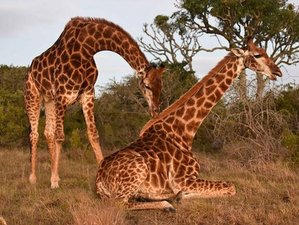 9 Days Delightful Zimbabwe Safari Honeymoon