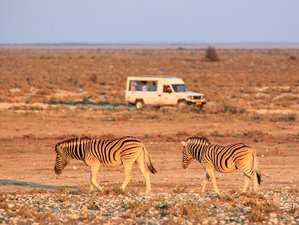 10 Days Northern Namibia Camping Safari in Namibia