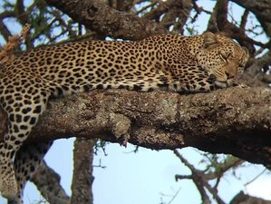 8 Days Experience the Best of Northern Tanzania Private Safari