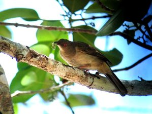 6 Day Northern Short Route Birdwatching Tour in Peninsular Malaysia