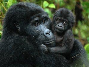 7 Days All-Inclusive Primate Safari in Uganda