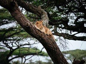 2 Days Safari in Ngorongoro Crater and Tarangire National Park, Tanzania