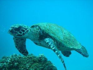 4 Day Marine Wildlife Holiday in Corcovado National Park and Caño Island, Puntarenas