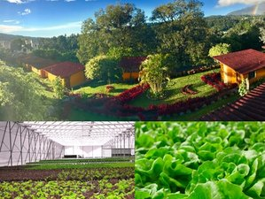 5 Days Educational Honey Farm Visit, Hydroponic Tour, and Nature Walk in Boquete, Panama