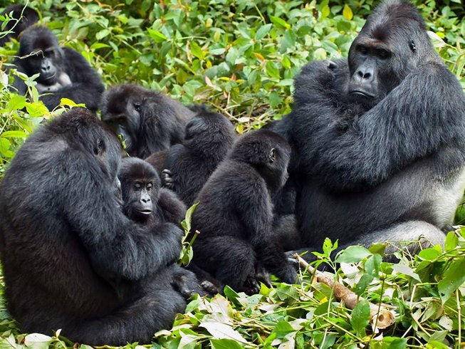 5 Days Gorilla and Chimpanzee Safari in Uganda