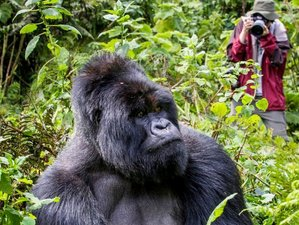 3 Days Gorilla Tracking Safari in Bwindi National Park, Uganda