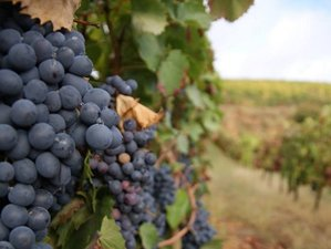 9 Days Cultural Portuguese Wine Tours