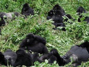 4 Days Rectangle Gorilla Trekking Safari in Rwanda