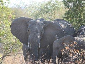 2 Days Kruger National Park Safari in South Africa