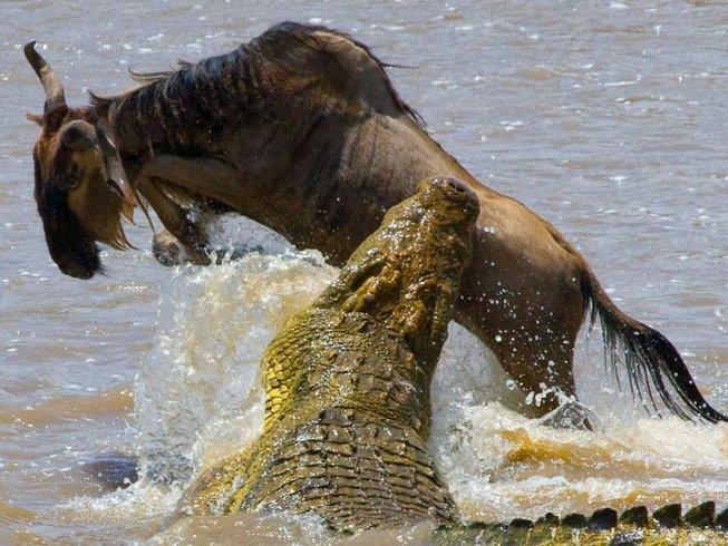 8 Days Indelible Private Safari in Kenya