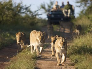 10 Days Great East Africa Safari in Kenya and Tanzania