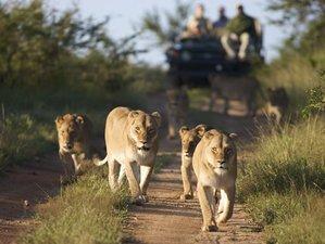 10 Days Great East Africa Safari in Kenya and Tanzania