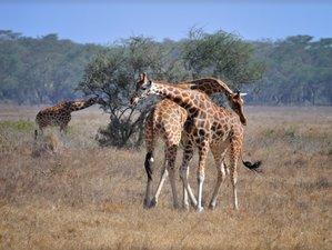 3 Days Maasai Mara Budget Safari in Kenya