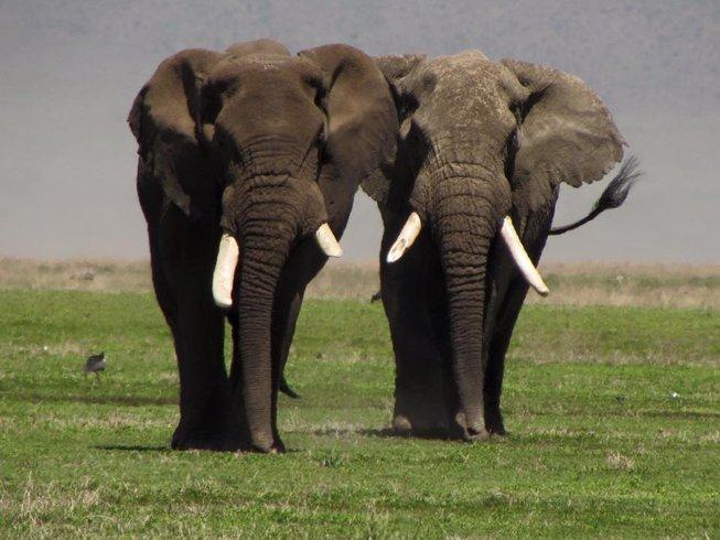 4 Days Spectacular Serengeti Safari in Tanzania