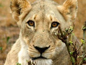 5 Days Exciting Kruger South Safari in South Africa