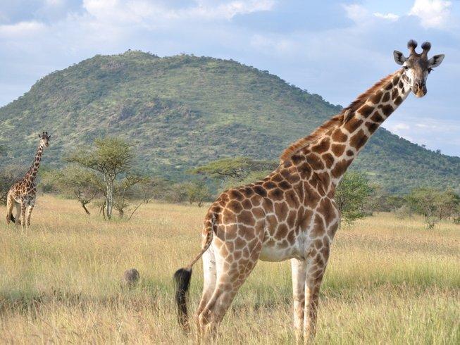 5 Days Nothern Zone of Tanzania Safari