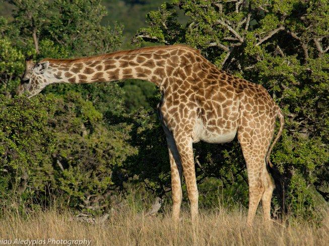 7 Days Kenya Safari from Samburu to Maasai Mara