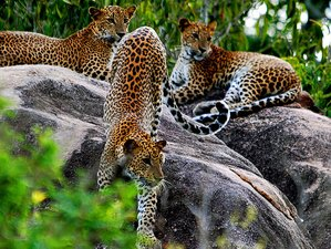 3 Days Camping Safari in Yala National Park, Sri Lanka
