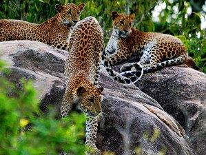 3 días de safari de acampada en el Parque Nacional Yala, provincia de Uva