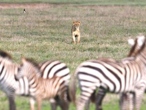 5 Days Optimistic Serengeti and Ngorongoro Budget Safari in Tanzania
