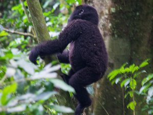 7 Days Primates, Wildlife Safari and Cultural Tour  in Rwanda