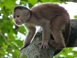 3 Day Hamadryade Experience Wildlife Tour in Ecuador