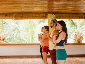 28 Day 200-hour Online Meditation and Yoga Teacher Training