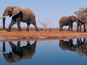 7 Days Migration Quest and Classic Safari in Northern Tanzania
