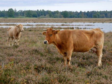 Midden-Drenthe