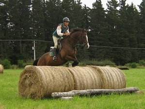 6 Days Riding Lessons and Guided Farm Trekking Horse Riding Holiday in New Zealand
