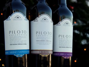 3 Days Piloto Wine Tasting Holiday Lisbon, Portugal
