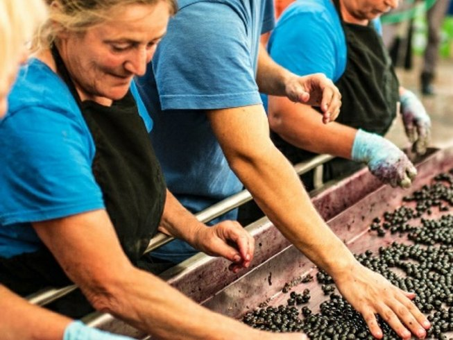 9 Days Ultimate Wine and Food Tours in Tuscany, Italy