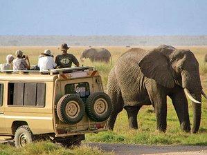 7 Days Luxury Safari Tour in Northern Tanzania