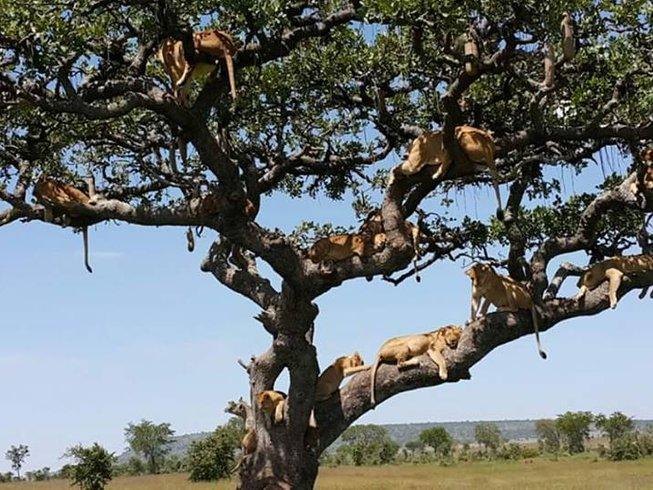 12 Days Wildlife Safari in Kenya and Tanzania