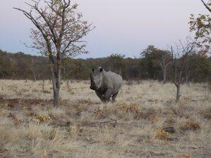 3 Days Etosha Camping Safari in Namibia