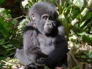 3 Days Gorilla Trekking Safari in Bwindi National Park, Uganda