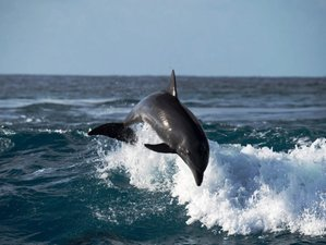 5 Day North Coast Dolphin Watching Safari in Singaraja, Bali