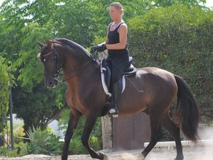 3 Day Exclusive and Intensive Horse Dressage Camp in Malaga, Costa del Sol