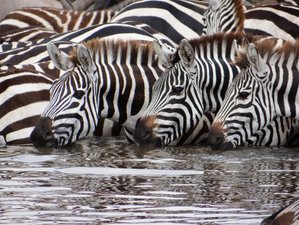 4 Days Serengeti and Ngorongoro Safari in Tanzania