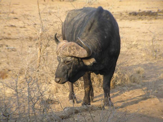 12 Days Big Five Safari South Africa