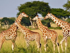 3 Days Incredible Safari in Kruger National Park, South Africa