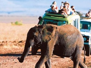 7 Days Backpackers Safari in Tanzania