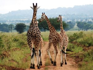 5 Days African Wilderness Safari in Kidepo Valley National Park, Uganda