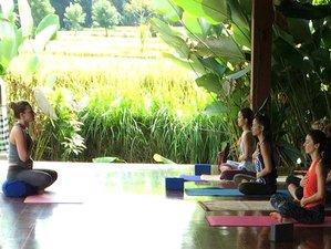 25-Daagse 200-urige Yoga Docentenopleiding in Bali, Indonesië
