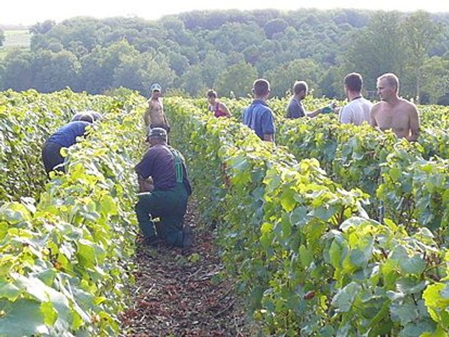3 Days Wine Tasting & Harvest Experience in Portugal