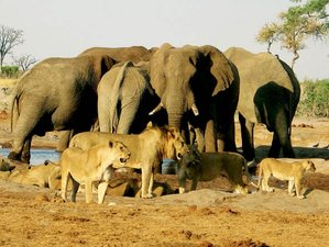 9 Days Safari South Africa, Swaziland, and Mozambique